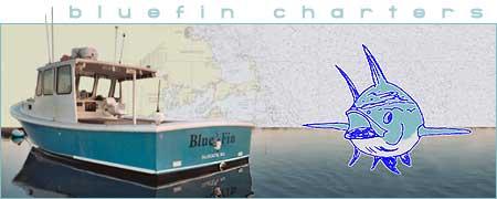 Bluefin charters massachusetts upper cape fishing charters for Fishing charters falmouth ma