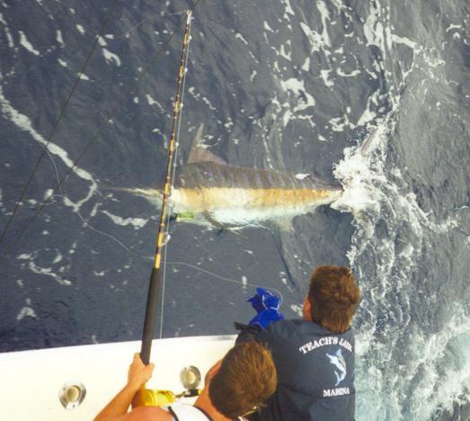 Skirtchaser sportfishing new jersey shore fishing charters for Barnegat light fishing report